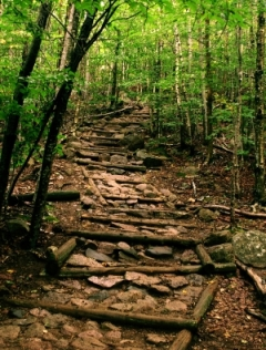 writing, challenge, practice, adapt, change, publish, book, author, path, forest, hike